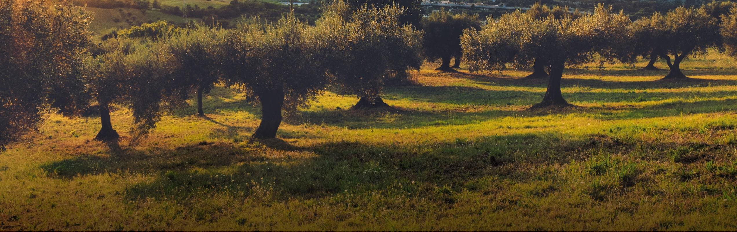 Frantoio Porto Di Mola | Il Territorio Alle Pendici Del Vulcano Di Roccamonfina
